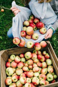 Pokrenuli smo organsku proizvodnju jabuka na 114 hektara